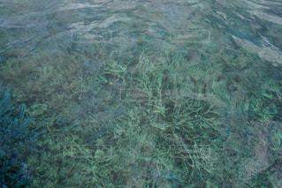 大神島の青い珊瑚の写真・画像素材[691085]