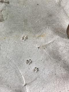猫の足跡が刻まれたコンクリートの写真・画像素材[1222711]