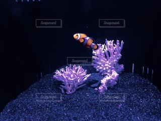 魚の写真・画像素材[637170]