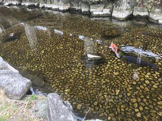 池 - No.635733