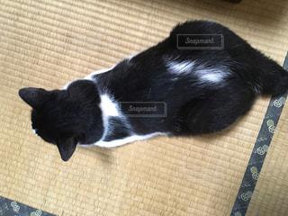 猫の写真・画像素材[636310]