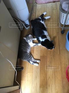 猫の写真・画像素材[654326]