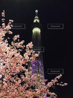 春 - No.647271
