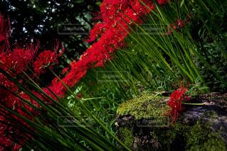 赤い花は木の前に立って - No.758973