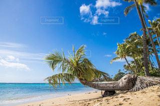 ヤシの木とビーチ - No.905806