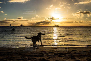 ビーチの上を歩く犬 - No.905808