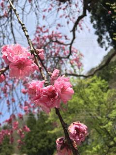 花の写真・画像素材[658811]