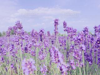 花の写真・画像素材[629266]