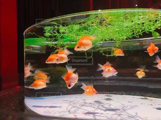 オレンジ ジュースのガラス - No.922003
