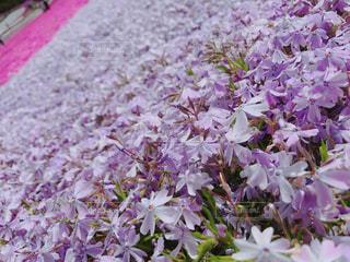近くに庭に紫の花のアップの写真・画像素材[1156841]