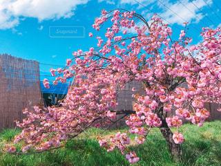 庭園に色とりどりの花のグループ - No.1156842