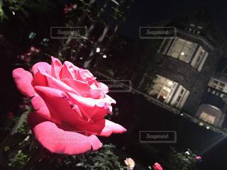赤花とピンクのテディベアの写真・画像素材[1183710]
