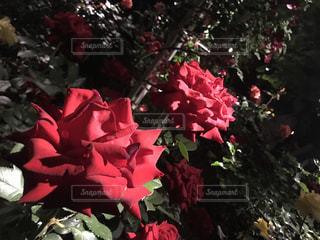 近くの花のアップ - No.1239201