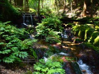 自然の写真・画像素材[629141]