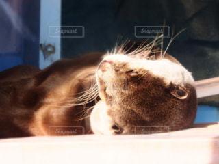 動物の写真・画像素材[632310]
