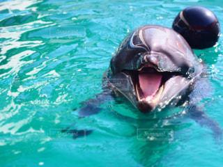 イルカの写真・画像素材[632313]