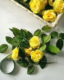 黄色の写真・画像素材[641970]