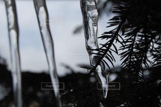 冬の写真・画像素材[642184]