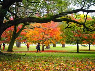 風景 - No.648510