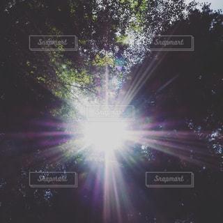 自然の写真・画像素材[663236]