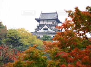 犬山城と紅葉の写真・画像素材[735466]