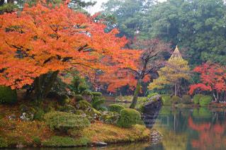 兼六園の紅葉の写真・画像素材[740565]