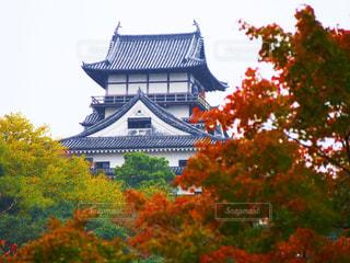 犬山城と紅葉の写真・画像素材[740566]
