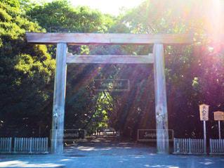 朝の日差しと鳥居 - No.748261