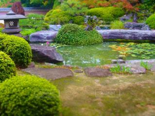 正法寺の庭の写真・画像素材[749940]