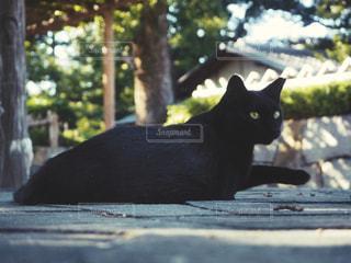 黒猫 - No.775138