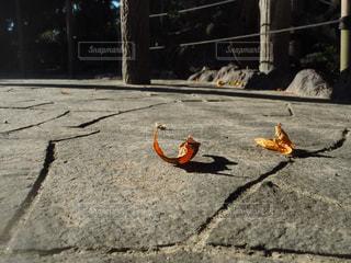 落ち葉の影の写真・画像素材[783445]