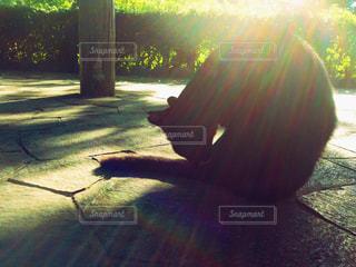 黒猫の写真・画像素材[783446]