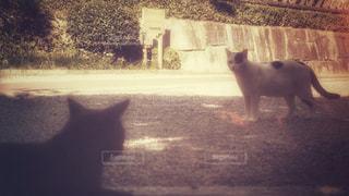 視線を交わすの写真・画像素材[810113]