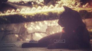 黒猫の写真・画像素材[810114]