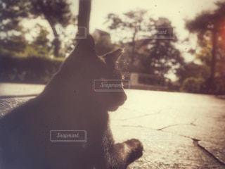 黒猫の写真・画像素材[810128]