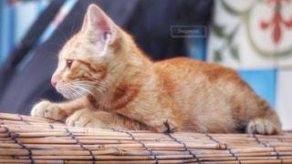 遠くを見つめる猫の写真・画像素材[823162]