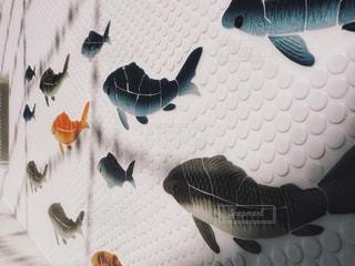 タイルの壁を泳ぐ鯉の写真・画像素材[852916]