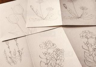植物のラフスケッチの写真・画像素材[880882]