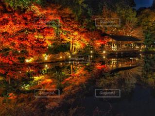 紅葉のリフレクションの写真・画像素材[888487]