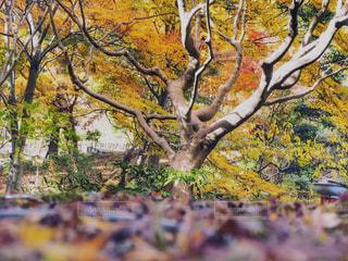 木の写真・画像素材[896720]