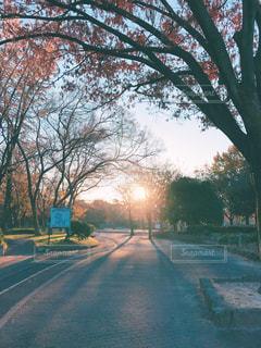 冬の朝の公園の写真・画像素材[907510]