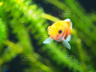 魚の写真・画像素材[942688]
