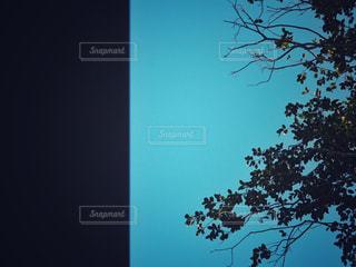 見上げた空の写真・画像素材[961307]