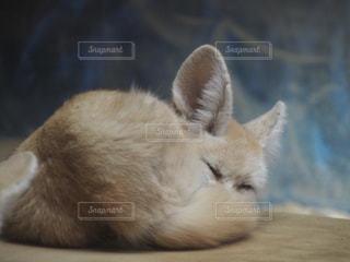 横になって、カメラを見ている猫の写真・画像素材[982066]