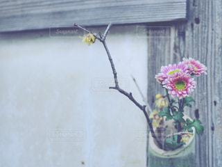 生け花の写真・画像素材[1001696]