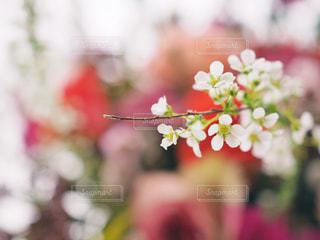 近くの花のアップの写真・画像素材[1030137]