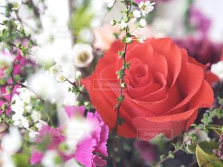 花束の写真・画像素材[1030140]