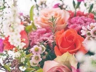 近くの花のアップの写真・画像素材[1030145]