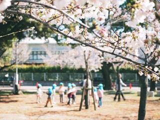 桜のある公園の風景の写真・画像素材[1078042]