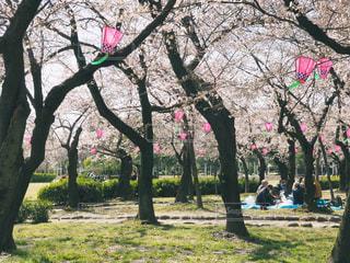 花見を楽しむ人々の写真・画像素材[1078043]
